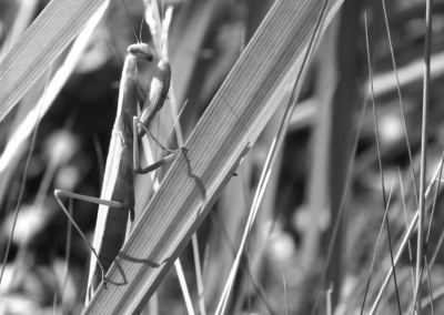 Série : Insectes